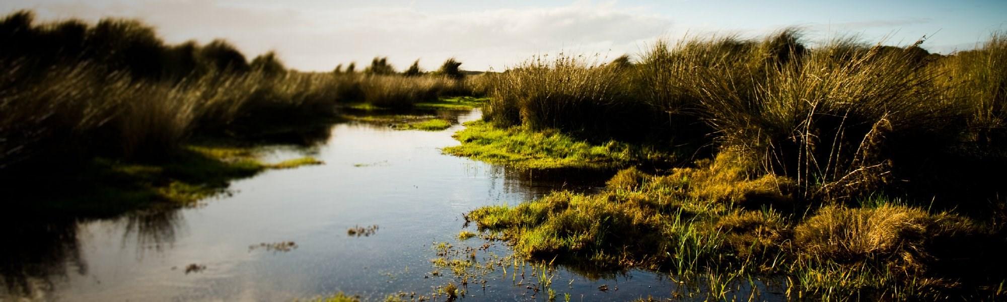Certificate in wetland science management uw professional skip to main content xflitez Gallery